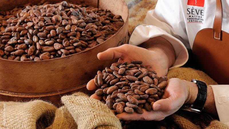 Cocoa beans in chocolatier's hands