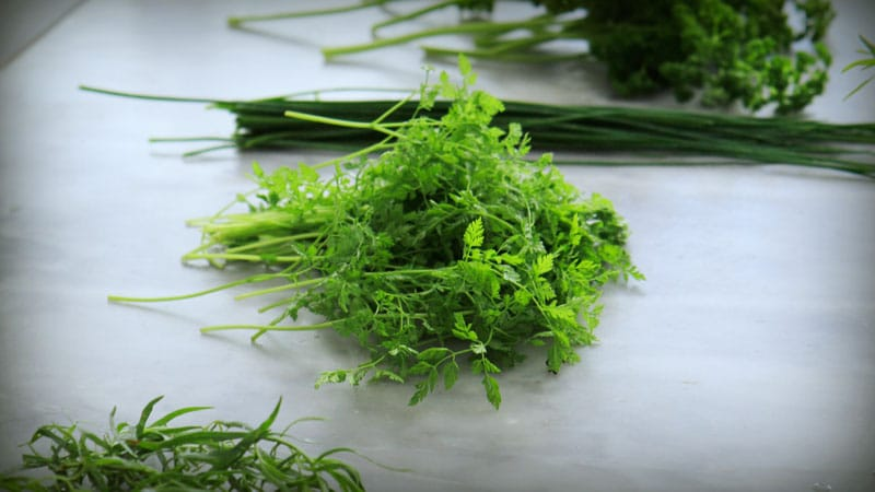 Fresh herbs for cervelle de canuts