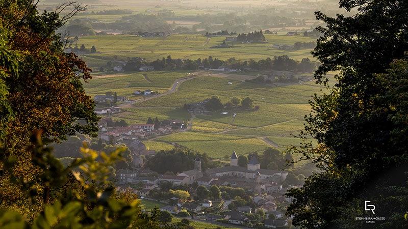 Beaujolais wine vineyards