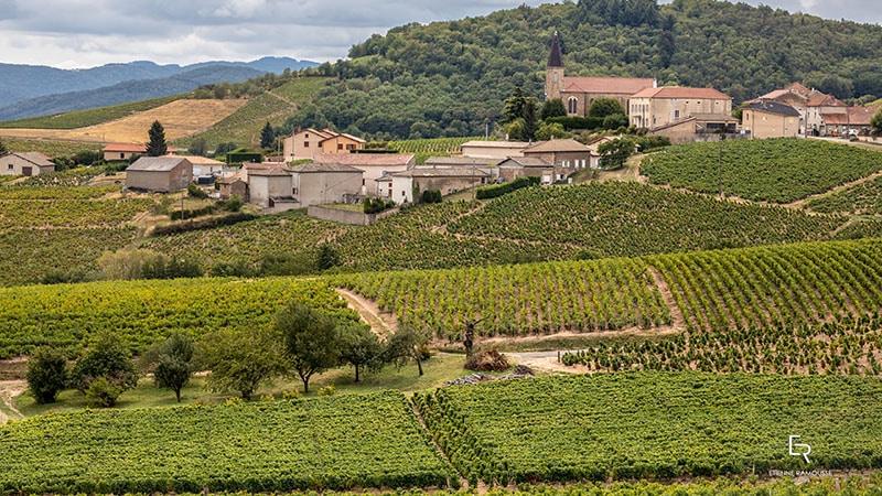 Beaujolais Wine wine yards